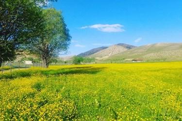 ییلاق گوشوارک در شهرستان مهدیشهر