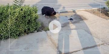 ماجرای عکس زنی مشغول آب خوردن
