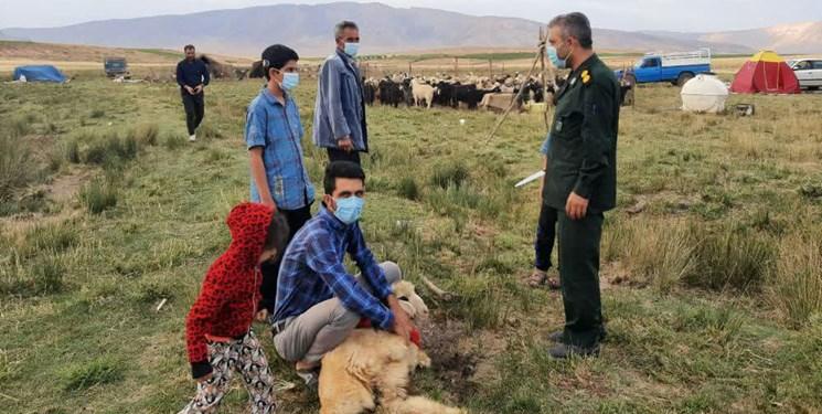 ۴۷5 راس دام توسط عشایر بوشهر قربانی شد