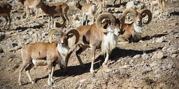 فارس من  ارتقای پناهگاه حیات وحش حیدری به پارک ملی در گرو خروج دام از منطقه