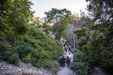 سرسبزی مسیر گلابدره  در ساعات اولیه صبح طراوت خاصی به مسیر کوهپیمایی  داده است.