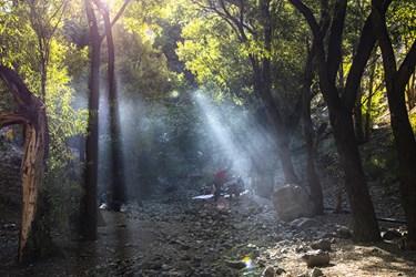 تعدای از کوهپیمایان بعد از طی مسافتی برای صرف صبحانه زیر سایه درختان اتراق کرده اند.