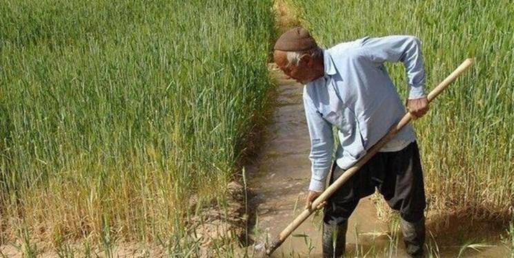 روی خوش کشاورزان گیلانی به بیمه/ کشاورزان: بیمه، خسارتها را واقعیتر ببیند