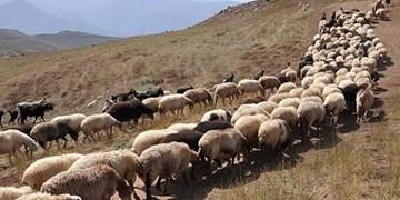 طرح خرید دام مازاد عشایر در استان یزد آغاز شد