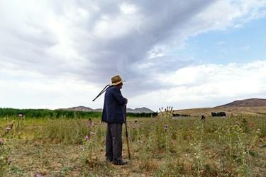 مرد روستایی در حال استراحت و چراندن گوسفندان خود در زمینهای اطراف تالاب قوری گول است.