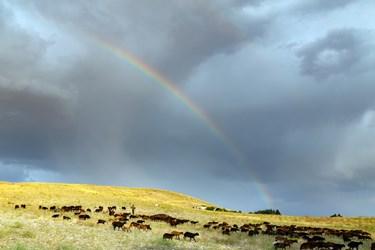 پسر جوان روستایی در حال  چراندن و هدایت گله گوسفندان خود در دامنه کوهی در اطراف تالاب قوری گول است. در حالیکه هنگام بارش باران تابستانی، رنگین کمانی بر آسمان نقش بسته است.