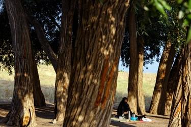 گردشگری در حال استراحت بین درختان اطراف تالاب قوری گول است.