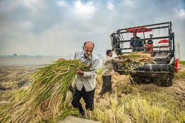 در مناطق مختلف مازندران  بنا بر شرایط محیطی و ابعاد زمین برداشت محصول تعیین کننده مکانیزه و یا سنتی آن است