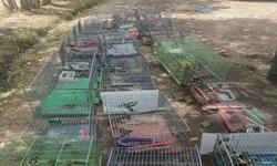 کشف و ضبط 140 فرد پرنده از متخلفین در شیراز
