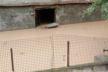 سیلاب در جاده چالوس