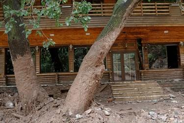 داغی آب سیلابی بر روی تنه درخت و ارتفاع آن کاملا نشان میدهد