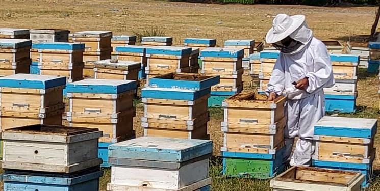 کفراج؛ روستایی با طعم عسل/ بزرگترین کانون متمرکز پرورش زنبورعسل برند ندارد