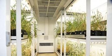افتتاح پروژه بهنژادی مولکولی، بهنژادی سریع و بانک ژن گیاهی در دانشگاه تبریز