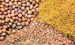 کشف 16 تن محموله خوراک آلوده دامی قاچاق در ایلام