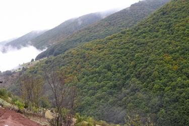 جنگلهای كوهستانی كه در حال تغيير رنگ هستند