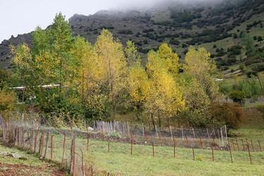 درختان صنوبر و تبريزي دست كاشت كه كاملا به رنگ پاييز در آمدند