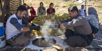 تولید کشمش به روش «بولاو» در کردستان