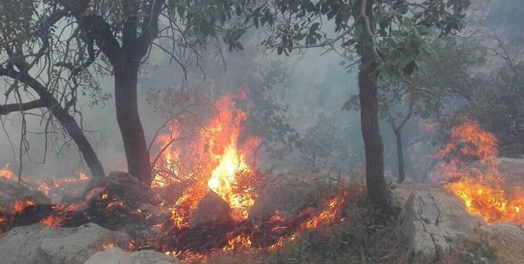 ممسنی قربانی آتشسوزیهای عمد و غیرعمد