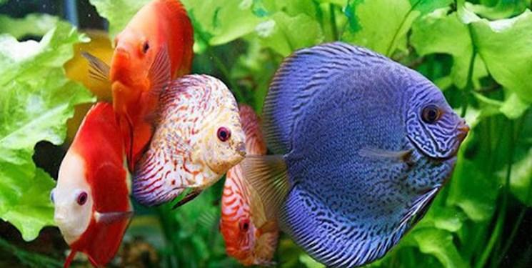 گره کور ادارات بر پیکر کارآفرینی/ غاز چرانی در واحد پرورش ماهی!