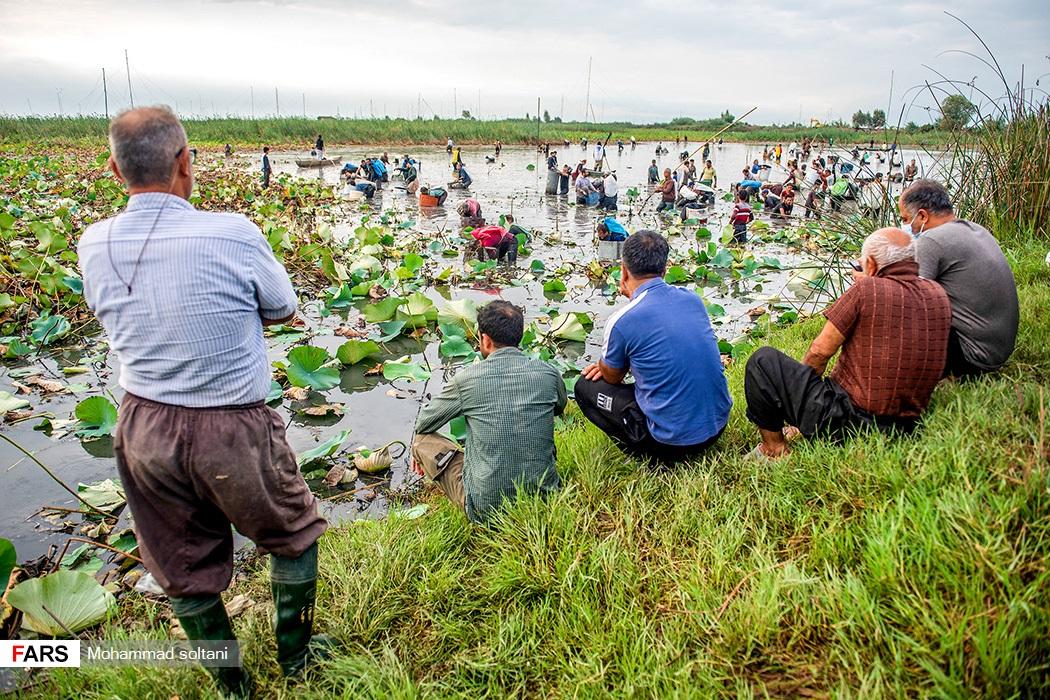 ماهیگیری سنتی در آببندان روستای رودبست شهرستان بابلسر
