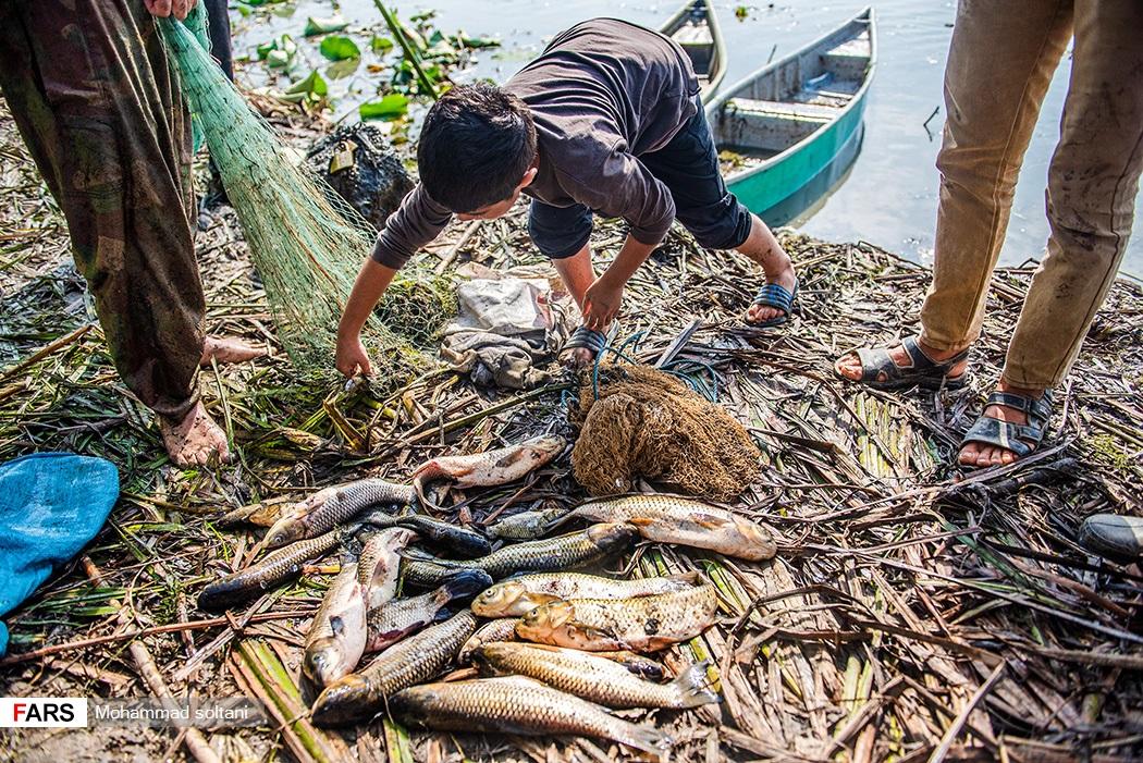 ماهی های صید شده از این اب بندان