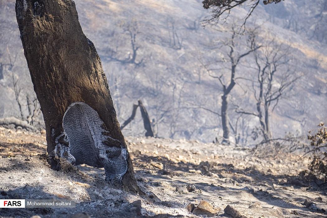 سوختن ریشه درختان  در آتشسوزی  که پس از سه روز کنترل شد