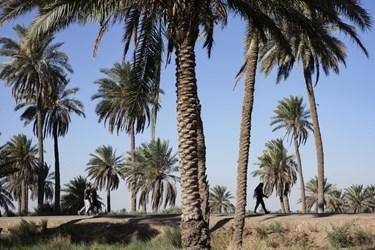 راهپیمایی اربعین حسینی در طریق العلماء