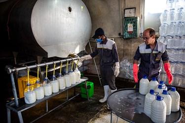 پر نمودن ظروف شیر در شرکت دامداری تلیسه نمونه