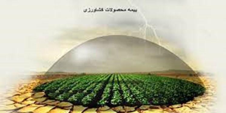 چتر بدون سایه بیمه کشاورزی