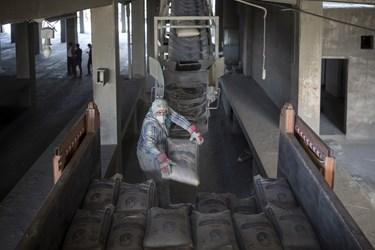 بار گیری مکانیزه کیسه های سیمان پس از بسته بندی توسط کارگران در کارخانه سیمان تهران