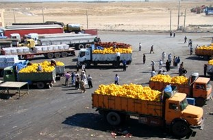 Iran Ups Exports of Agricultural Products