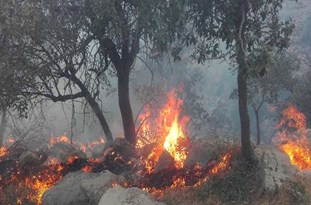 Commander: Army Helicopters Flying to Stop Wildfire in Southwestern Iran