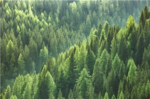Use of Forests to Offset Carbon Emissions Requires an Understanding of Risks