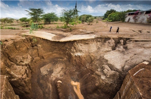 FAO: Soil Helps to Combat, Adapt to Climate Change