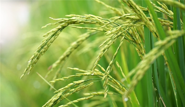 Minister Underlines Iran's Almost Self-Sufficiency in Production of Agricultural Food