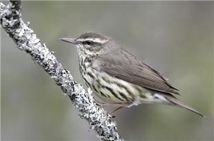 Birds' Seasonal Migrations Shift Earlier