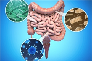 Two Studies Highlight Effects of Diet, Microbiome on Heart, Aging