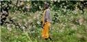 ملخ آفریقا