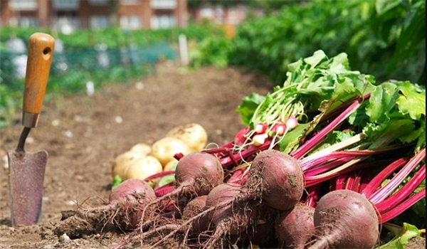 Growing Fruits, Vegetables in City