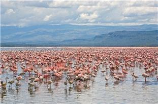 Lake Urmia to Gain New Life through Iran-Japan Cooperation