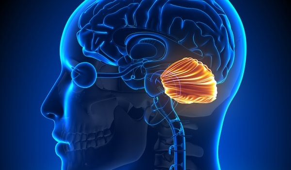 'Little Brain' Not So Little After All