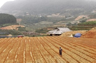 FAO: COVID-19, Rising Hunger, Climate Change Urgently Need to Be Battled Back in Asia, Pacific