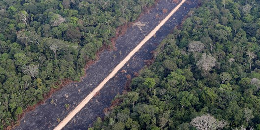 Mission to Save Amazon's Animals from Fires