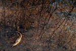 Rains Last Hope to Put out Brazil Fires Cause Devastation across Brazil's Wetlands